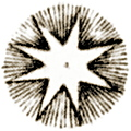 Plate XLII.—Astronomy: detail: antique star engraving