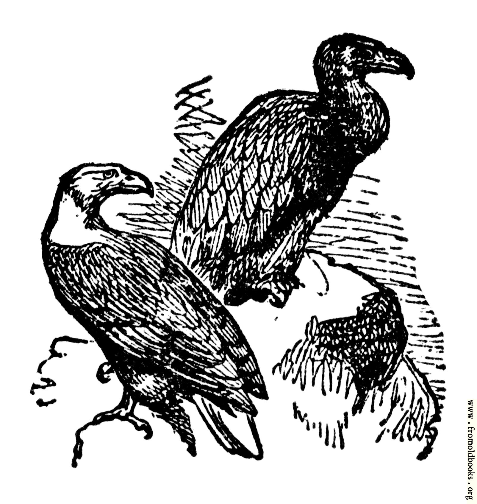 ares vulture images reverse search