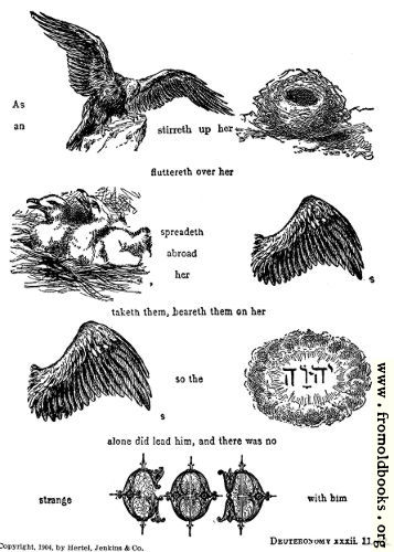 [Picture: 55.—As an eagle stirreth up her nest, fluttereth over her young,...]