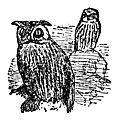 The Little Owl and the Great Owl