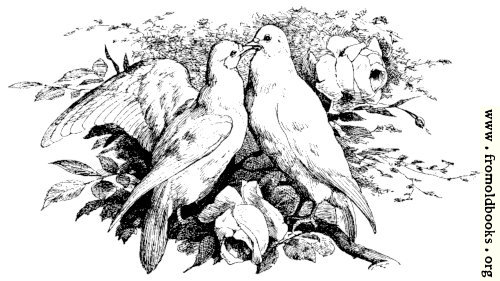 [Picture: Love Birds Kissing]