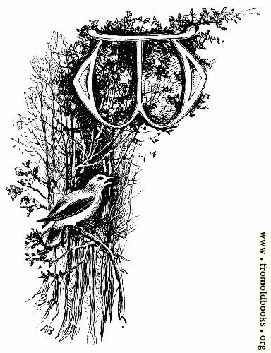 [Picture: Vignetted Letter W With Bird in forest]