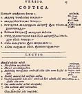 [picture: 13: Coptica]