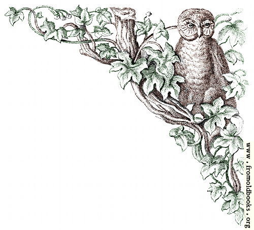 [Picture: Corner decoration: brown owl with green leaves and tree]