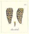[picture: 62. Burdock seeds]