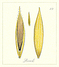 79. Quack Seeds