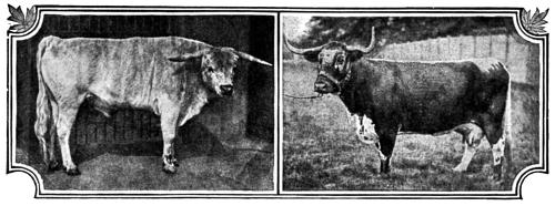 [Picture: British Breeds of Cattle I (1/3)]