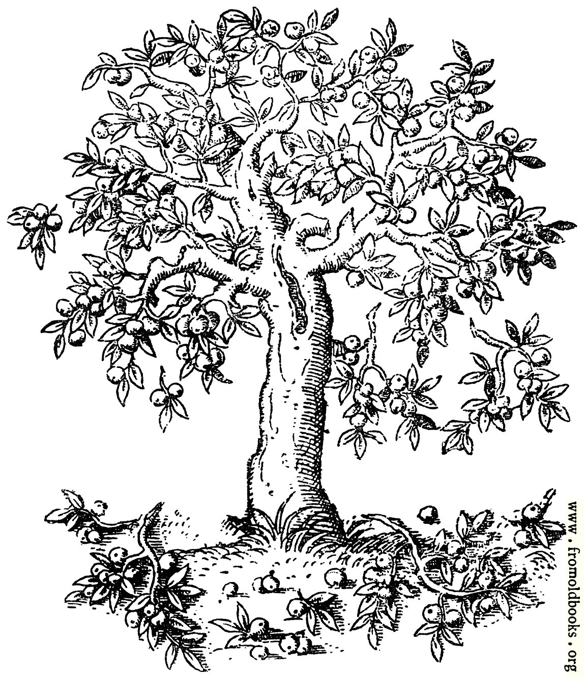 Apple Tree Drawing Sketch Coloring Page