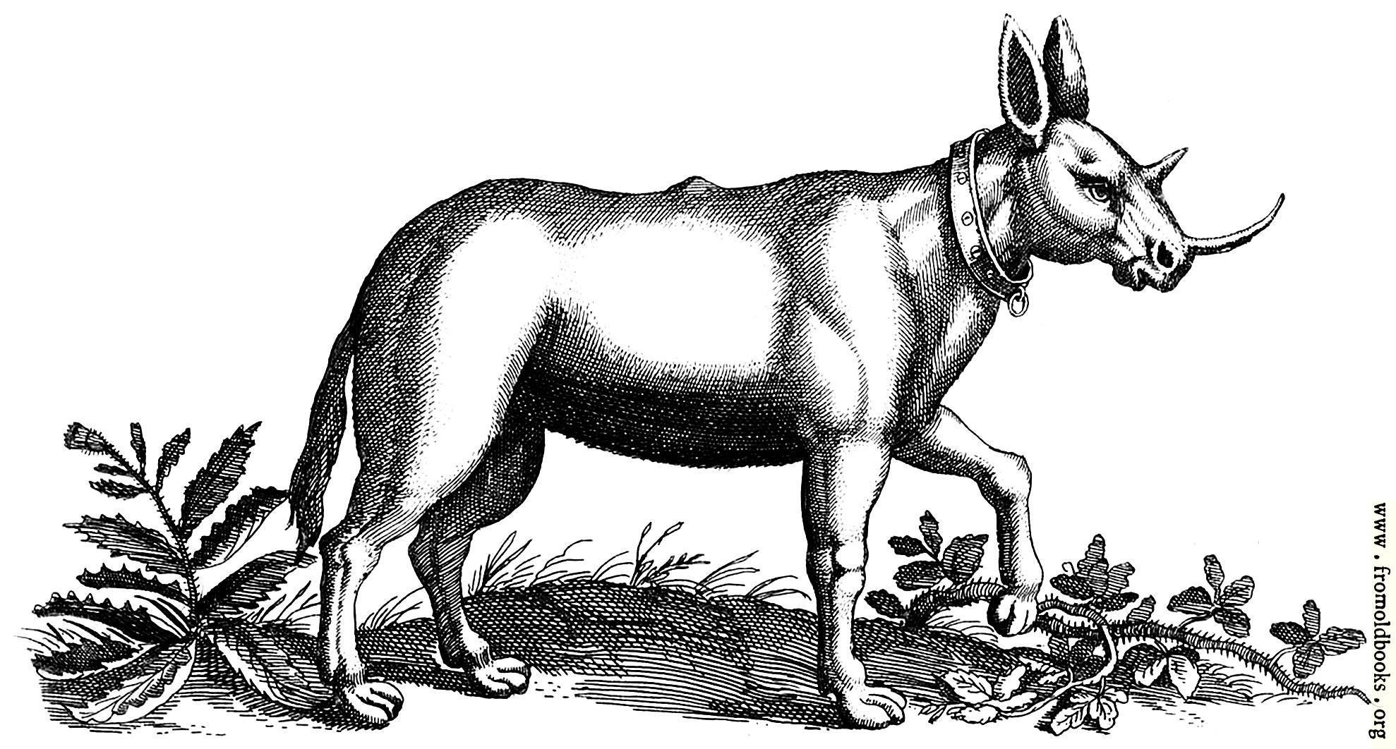 http://www.fromoldbooks.org/Jonstonus-FourFootedBeasts/pages/0153-a-monoceros-engraving/0153-a-monoceros-engraving-q85-1978x1062.jpg