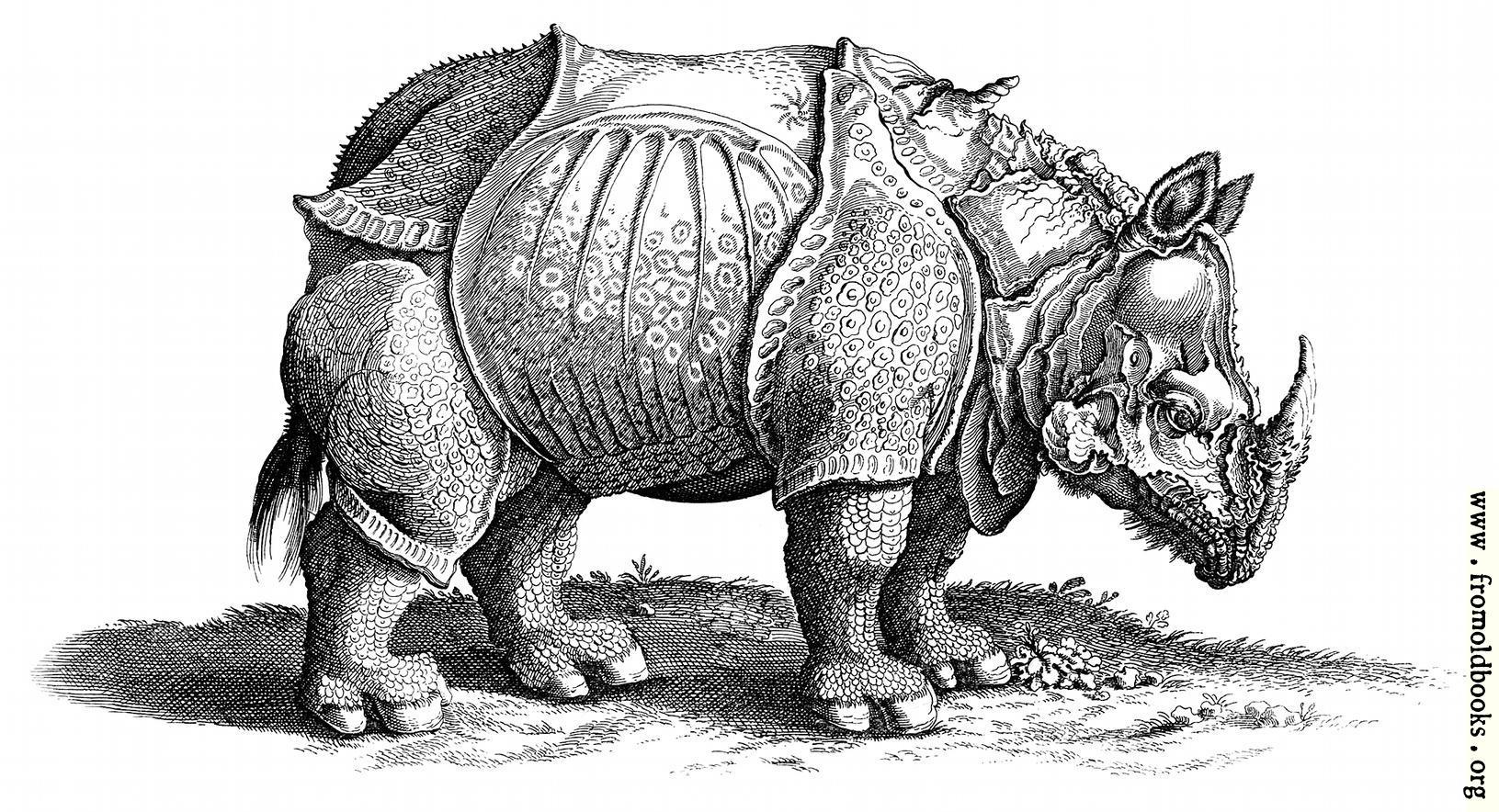Een Kleurplaat Van Dieren Rhinocerous Hornnase Rhinocer Engraving