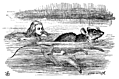 [picture: Alice swimming near a mouse]