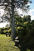 Tree with benches and book