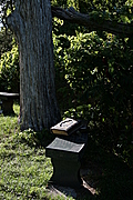 Tree with benches and Bible