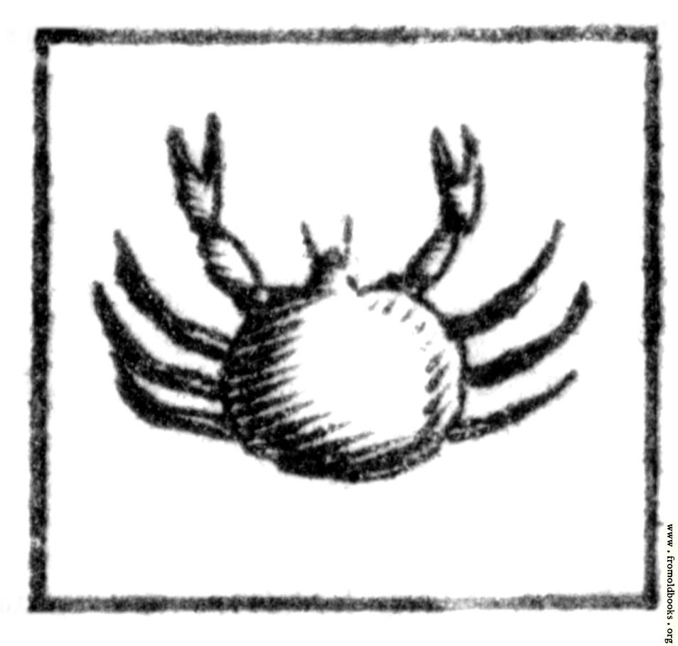 Zodiac Tattoos | Tattoo Designs Of Zodiac Signs