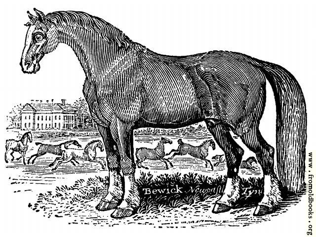 [Picture: The Horse]