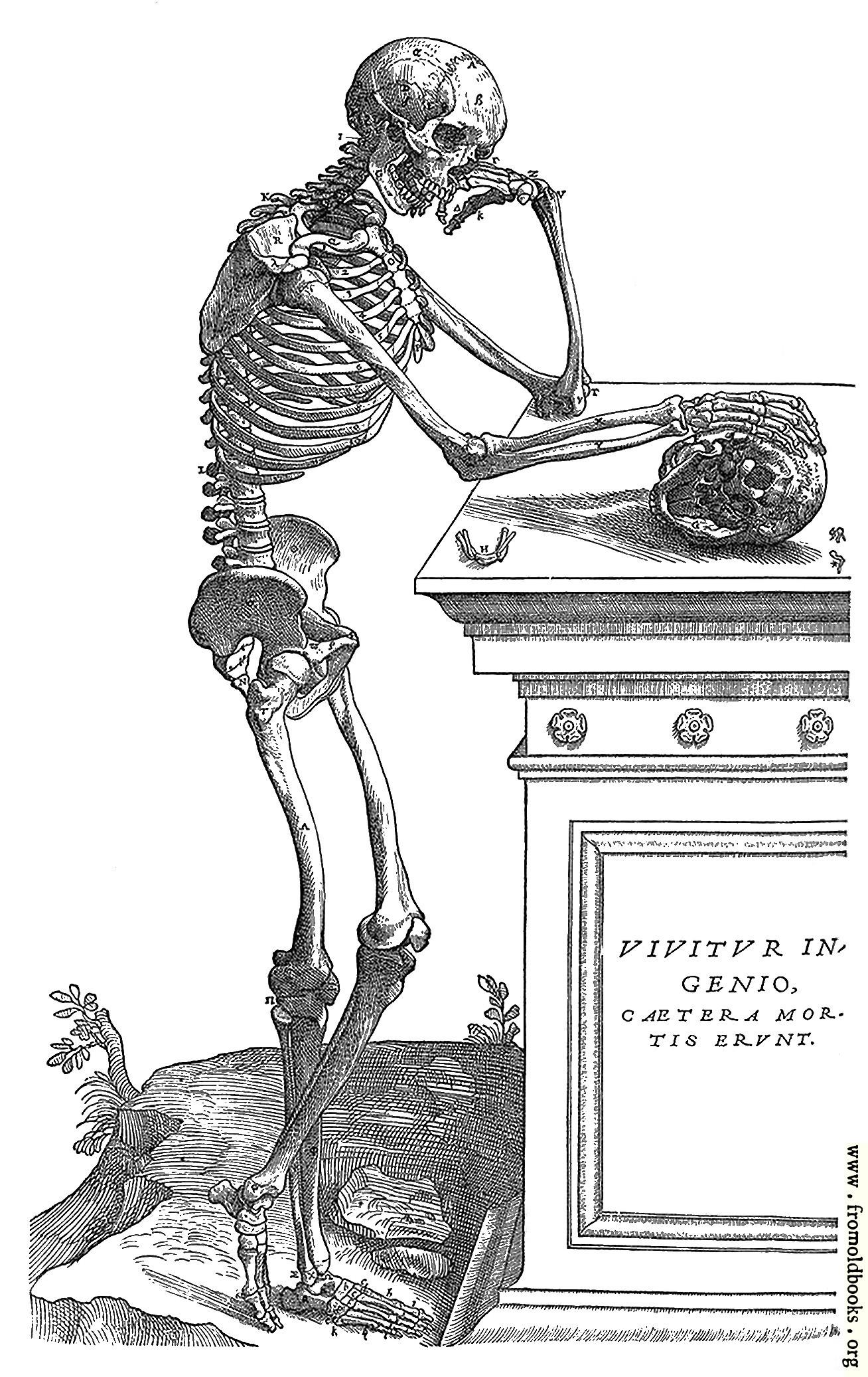 164  skeleton with skull