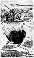 Frontispiece: The Ostrich.