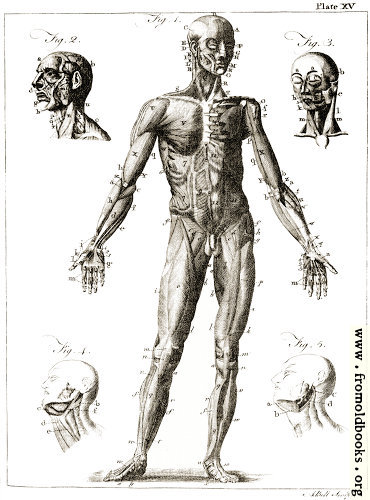[Picture: Plate XV.—Anatomy.]