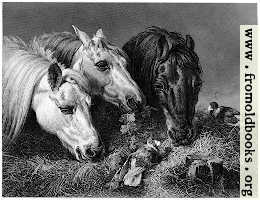 [picture: Horses eating a scanty meal]