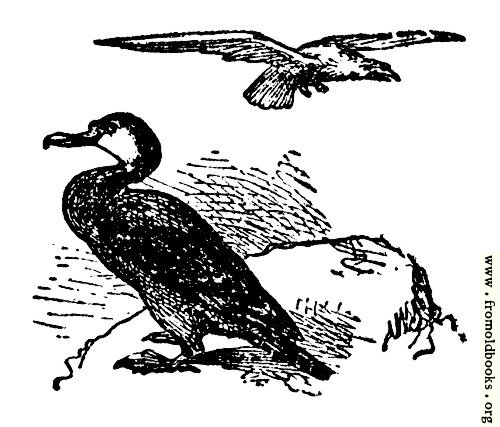 [Picture: The Gier Eagle and the Cormorant]