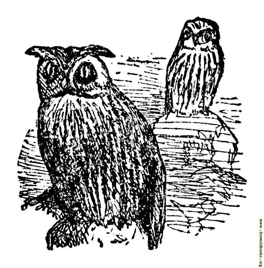 [Picture: The Little Owl and the Great Owl]