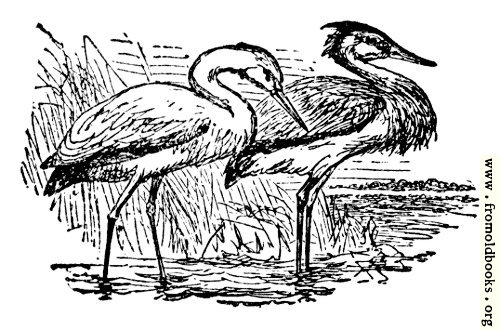 [Picture: The Stork and the Heron]