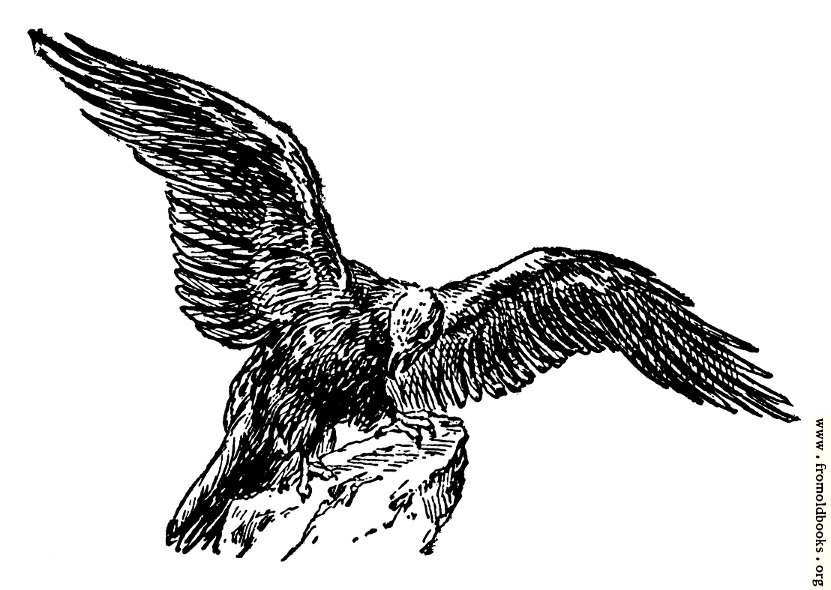 [Picture: The eagle, from the book of Deuteronomy ch. 32 v. 11]