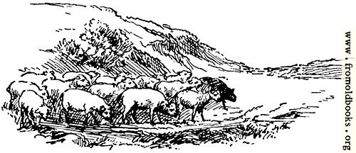 [Picture: Sheep, from p. 69]