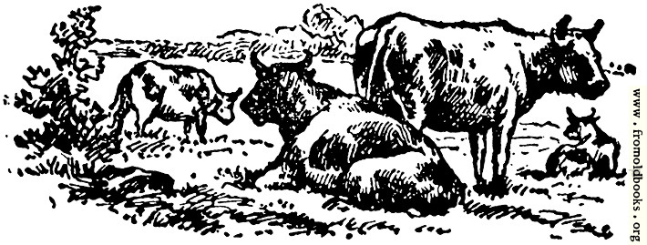 [Picture: Oxen, from p. 69]