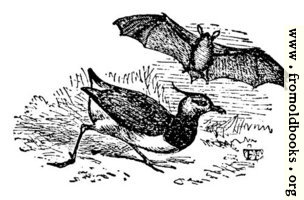 [picture: The Lawing and the Bat]