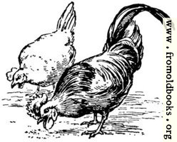 [picture: Fowl of the air, from p. 69]