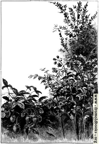 [Picture: Full page border of wild flowers]