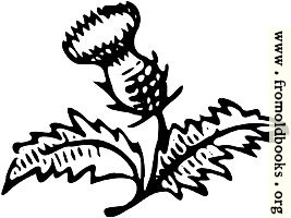 [picture: Thistle Ornament]