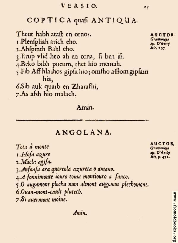 [Picture: 25: Coptica quasi Antiqua; Angolana]