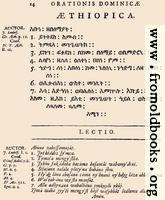 [picture: 14: Æthiopica]