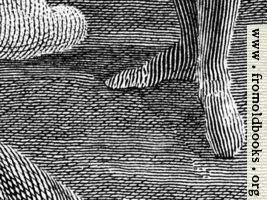 [picture: Engraving detail: stripy feet]