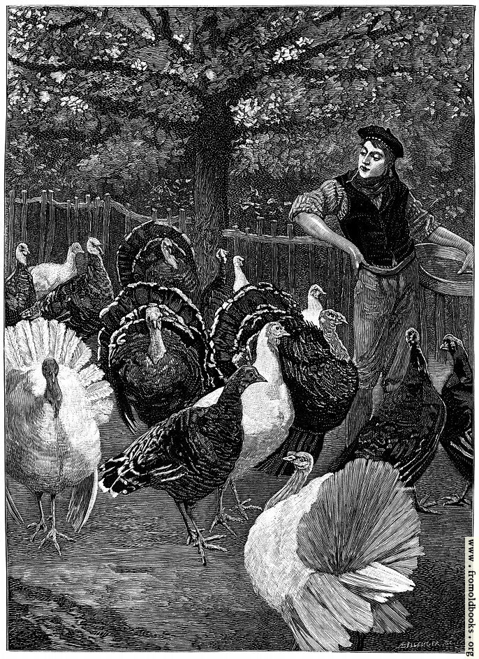 [Picture: The Condition of the Turkey]