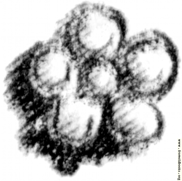 [Picture: Typographical ornament or printer's flower]