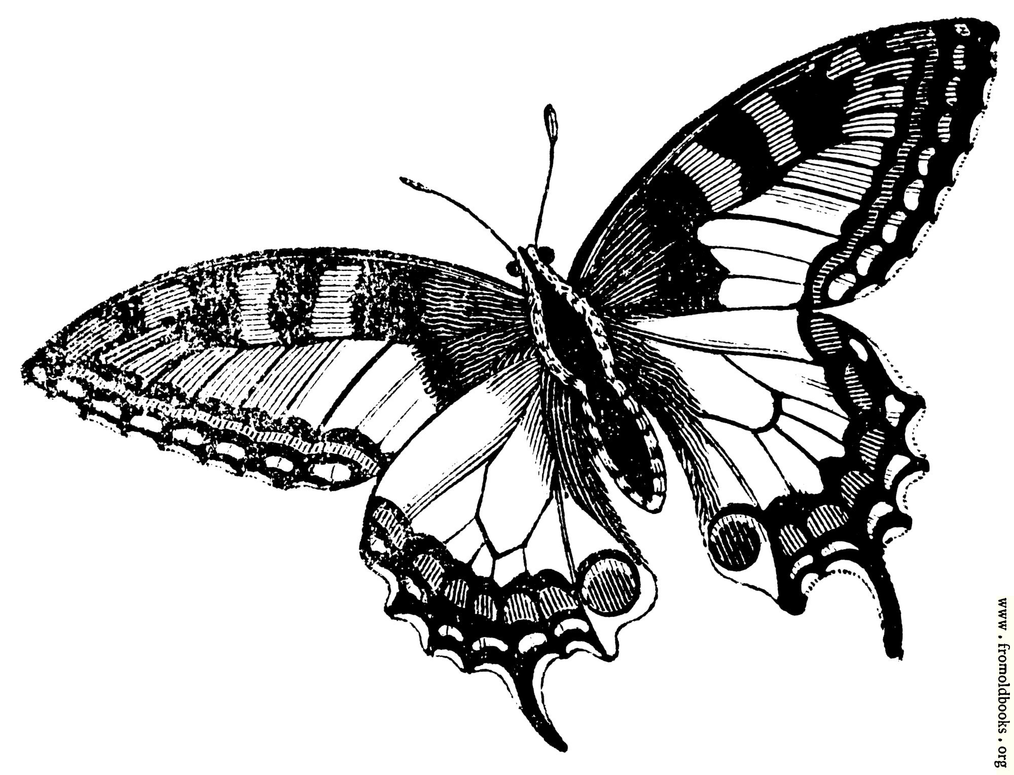 [Picture: 678.—Swallowtail Butterfly]