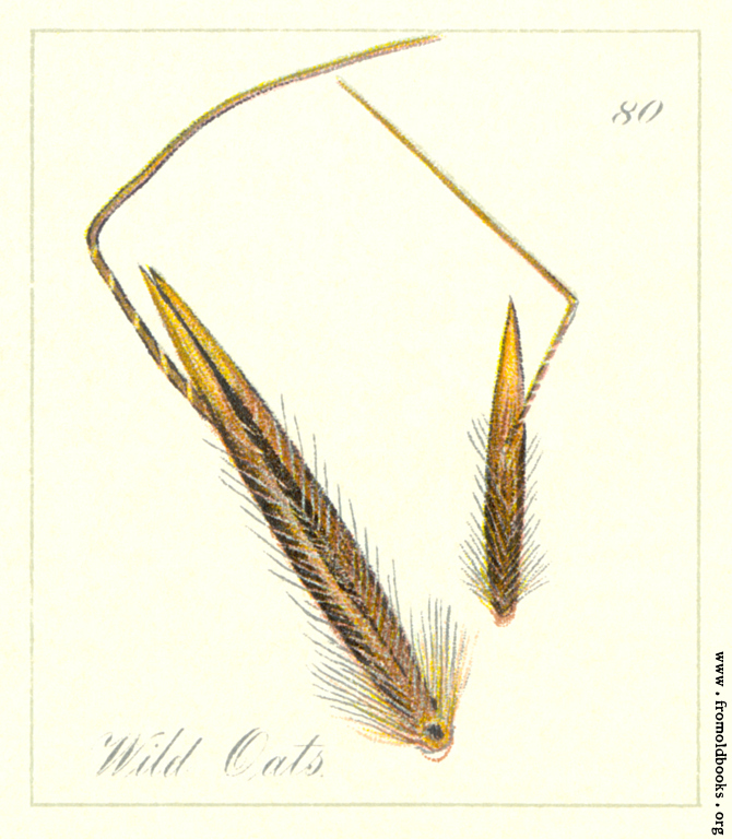[Picture: 80. Wild Oats Seeds]