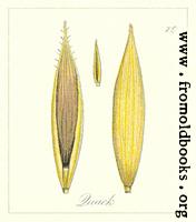 [picture: 79. Quack Seeds]