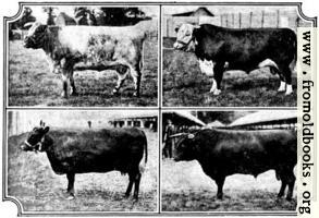[picture: British Breeds of Cattle I (2/3)]
