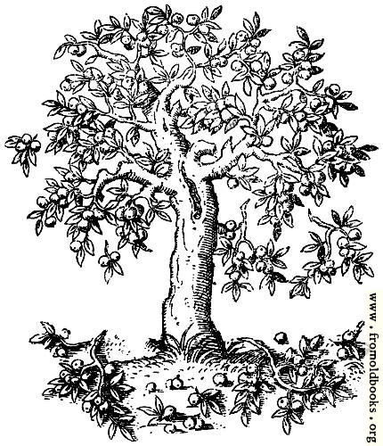 [Picture: 322.—Apple Tree. Pyrus Malus. C. S.]