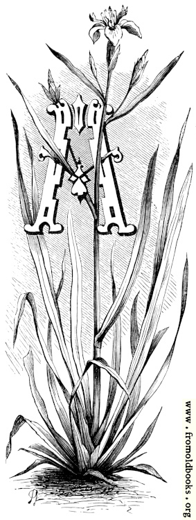 [Picture: Initial letter A with iris]