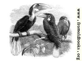 [Picture: Hornbills]