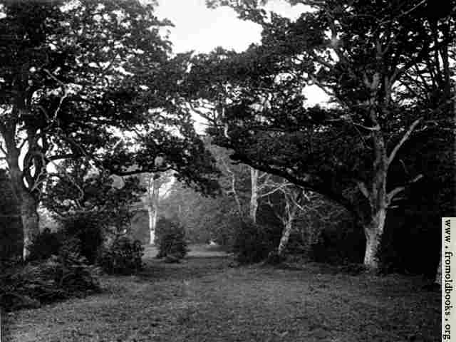 [Picture: A Glade in the New Forest, Hampshire]