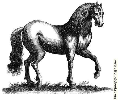 [Picture: 135b.—Antique engraving of a horse]