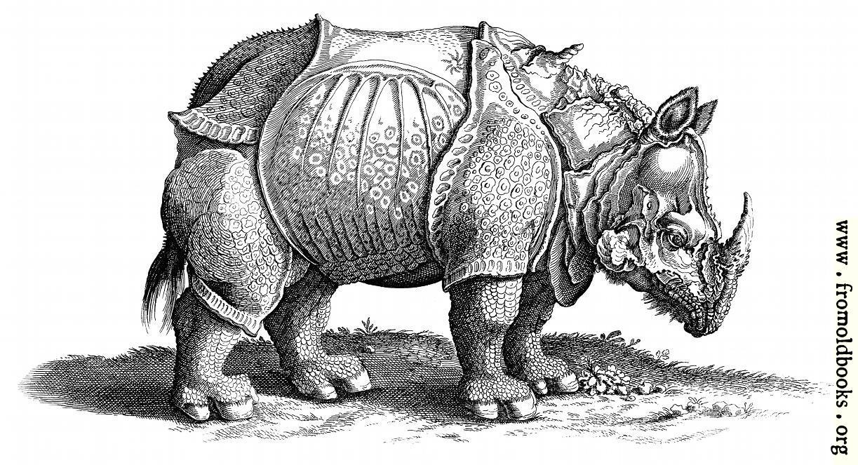 Q De Rhino Rhinocerous (Hornnase ...
