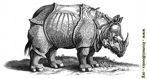 [Picture: Rhinocerous (Rhinoceros, Hornnase Rhinocer) Old Engraving or Woodcut]
