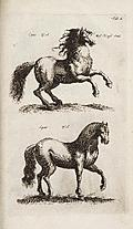 [picture: Tab. I.: Horses]